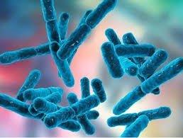 Probiotico foto google